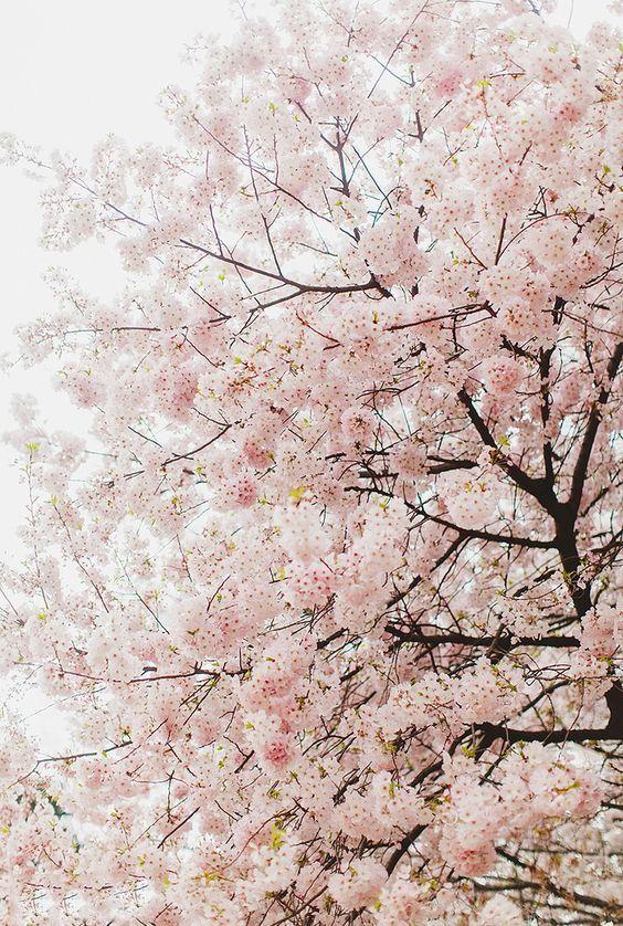 樱花粉口红适合什么妆 樱花粉口红试色怎么化