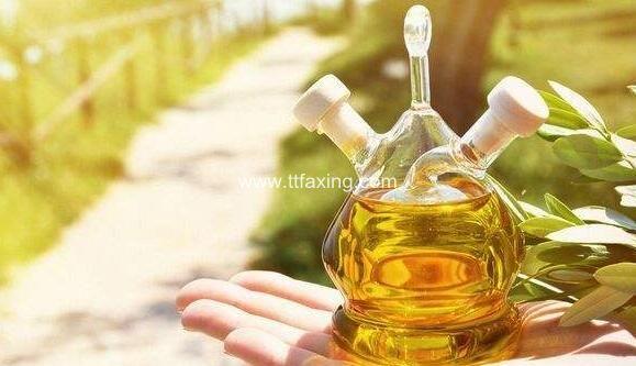 橄榄油可以抹在头发上吗 橄榄油护理头发怎么用 ttfaxing.com