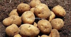 土豆皮煮水能染发吗 土豆皮煮水染发怎么做